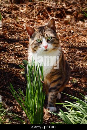 grüne Augen Katze im Wald - Stockfoto