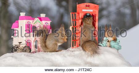 Nahaufnahme der roten Eichhörnchen in einem Call-Box mit anderen neben einem Motor-zyklus und und Haus im Schnee - Stockfoto