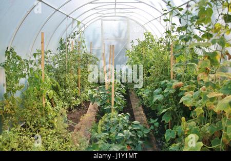 tomaten gew chshaus treibhaus gew chshaus niederlande westland in der n he von rotterdam