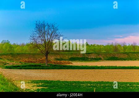 Wirklich gesättigten Landschaft mit einem zentralen Baum ohne Blätter - Stockfoto
