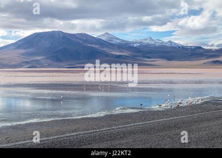 Laguna Colorada (rote Lagune) Bolivean Altiplano - Abteilung Potosi, Bolivien - Stockfoto