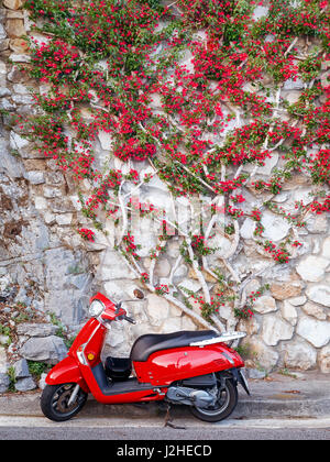 Roter Roller geparkt am Straßenrand und Hintergrund der blühenden Pflanze der gleichen Farbe. - Stockfoto