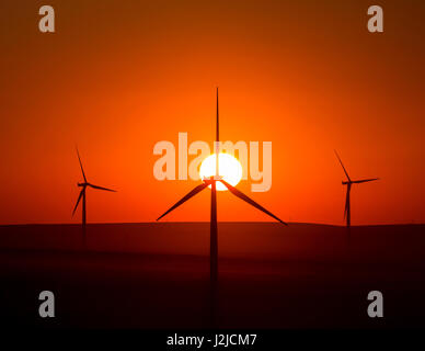 USA, Washington State, Walla Walla County. Windmühlen in der südwestlichen Ecke des Countys. Stateline Wind-Projekt. - Stockfoto