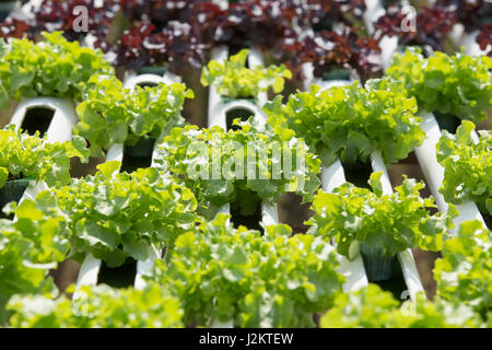 hydroponic in farm methode der wachsenden organischen. Black Bedroom Furniture Sets. Home Design Ideas