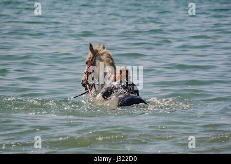 """Longrock, in der Nähe von Marazion, Cornwall, UK. 2. Mai 2017.  Großbritannien Wetter.  """"Cornwall schwimmen Pferde"""" - Stockfoto"""