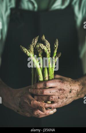 Handvoll frische ungekochte saisonal Spargel in schmutzige Mann Hände - Stockfoto