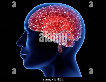 Kopf mit Gehirn. 3D illustration - Stockfoto