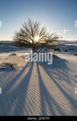 Silhouetted Baum beleuchtet durch die Sonne wirft einen langen Schatten über den Sand in White Sands National Monument, - Stockfoto