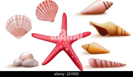 Reihe von bunten Vektor-Meer Muscheln und Steinen, Elemente und Dekoration für die Sommersaison. Vektor-Illustration. - Stockfoto