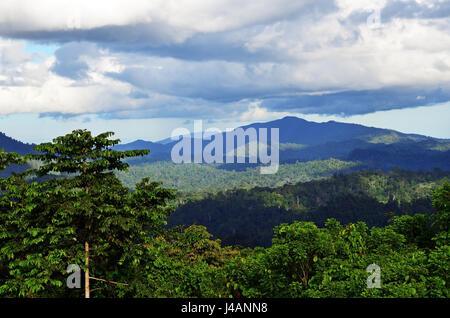 Primäre Dschungel im Danum Valley Conservation Park in Sabah, Borneo, Malaysia. - Stockfoto
