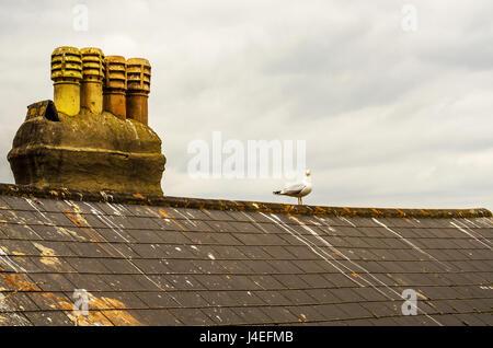Ein Vogel auf dem Schornstein und Dach des Gebäudes bedeckt mit grünem Moos, am Meer Ort aus der Vogelperspektive - Stockfoto