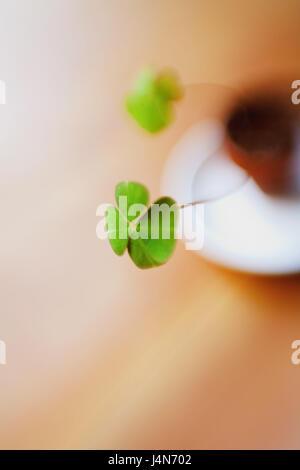 4-blättrige Kleeblatt - Stockfoto
