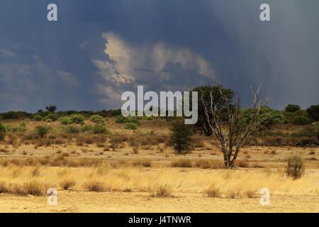 Silhouette eines umgestürzten Baumes beim Aufgang der Sonne - Stockfoto