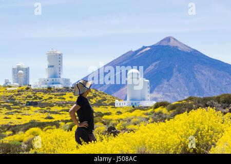 El Teide, Teneriffa, Kanarische Inseln, Spanien. Weibliche Wanderer zu Fuß durch ein Meer von ye; o w Blumen in - Stockfoto