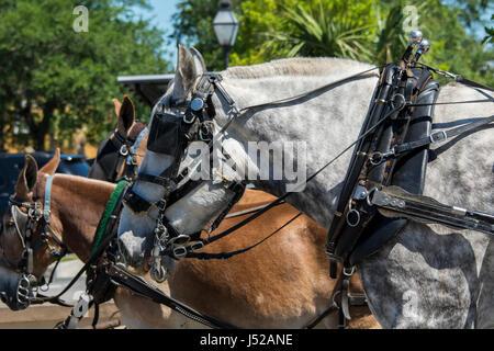 South Carolina, Charleston. Typische historische Innenstadt Sehenswürdigkeiten Beförderung Pferd. - Stockfoto