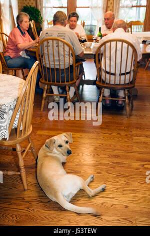 Arkansas Ozark Mountains Mountain View Land Oaks Bed and Breakfast Mann Männer Frau Frauen Senioren Paare Hund Haustier - Stockfoto