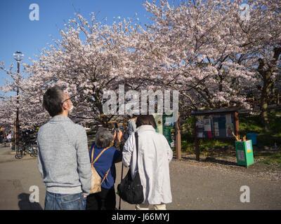 Eine Familie von drei Zeit Sakura Blüten in einem ruhigen Park anzeigen. Die alte Dame versucht, die Sakura-Baum - Stockfoto