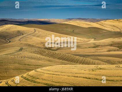 Abgeernteten Weizenfeld vom Kamm des Miller-Straße; Walla Walla County, Washington. - Stockfoto