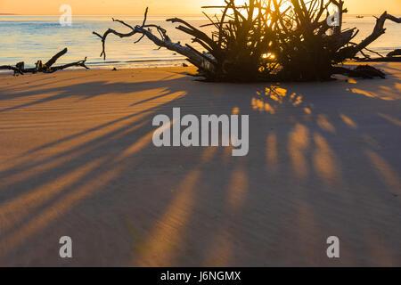 Treibholz Wurzeln werfen lange Schatten an einem farbenfrohen Sonnenaufgang morgen im Boneyard Strand im Nordosten - Stockfoto
