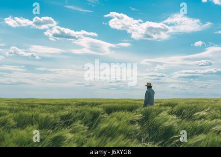 Landwirt zu Fuß durch ein grünes Weizenfeld an windigen Frühlingstag und Getreide zu prüfen - Stockfoto