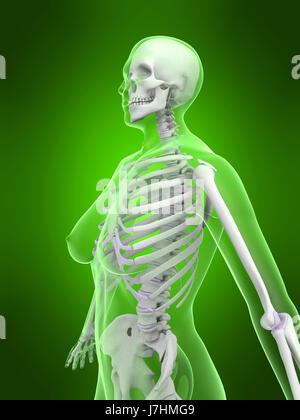 Frau weibliche menschliche Mensch Skelett Anatomie Osteoporose Hand Körpergesundheit - Stockfoto