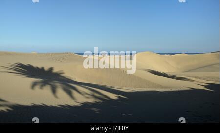 Touristen gehen auf umfangreiche Sand Dünen an der Küste in der Nähe von den Schatten einer Palme, Maspalomas, Gran - Stockfoto
