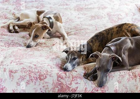 Drei glatt beschichtet taumelte auf einem gesteppten Toile De Jouy Bett decken - Stockfoto