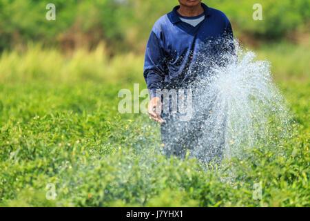 Thai Mann Bewässerung junge Chili-Pflanze in Hof - Stockfoto
