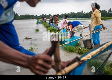 Bauern fangen Fische mit Fischen Netze auf überfluteten Reisfeld während des Monsuns in West Java, Indonesien. © - Stockfoto
