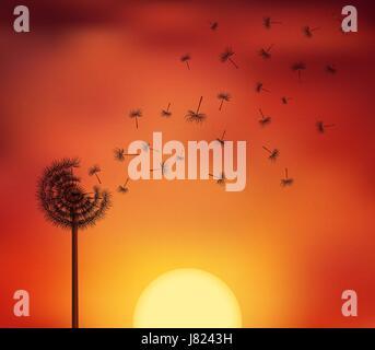 Silhouetten von Samen Flucht aus einer Blume Löwenzahn auf der Twillight Himmelshintergrund. Vektor-Illustration - Stockfoto