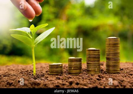 Weibliche Hand Bewässerung Jungpflanze mit Stack-Münze für wachsende Unternehmen - Stockfoto