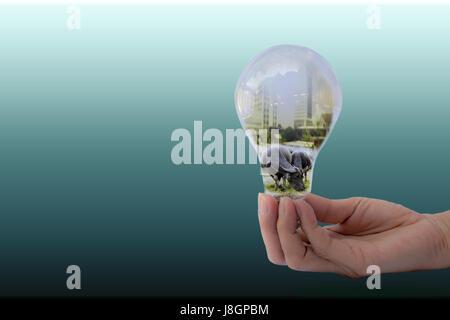 Hand der Person, die Glühbirne für Idee und Büffel in Birne - Stockfoto