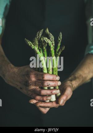 Handvoll frische saisonale Spargel in schmutzige Mann Hände - Stockfoto