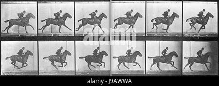 Muybridge Pferd Galopp - Stockfoto