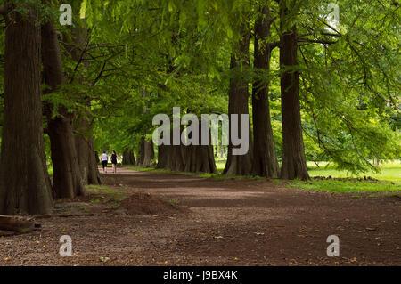 Fuß unter hohen Bäumen im Botanischen Garten in Montevideo, Uruguay - Stockfoto