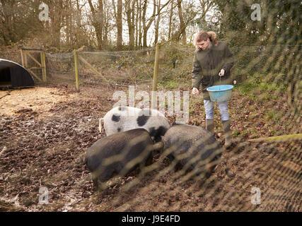 Niedlich Schwein Drahtzaun Pläne Bilder - Die Besten Elektrischen ...