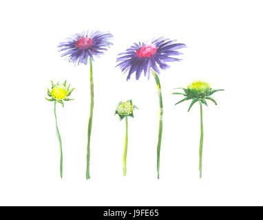 Leuchtende Aquarell Blume mit Blatt auf einfache für Schnitt weißen ...