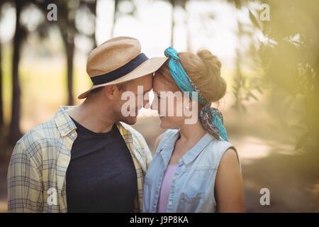 Fröhliches junges Paar Nasen reiben am Olivenfarm