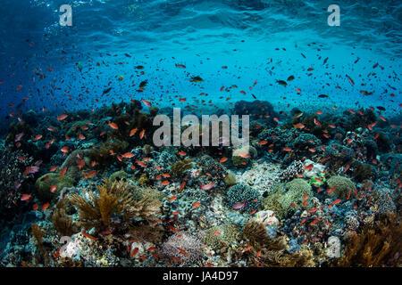 tropische insel oben und unterwasser mit korallen unter der meeresoberfl che atoll tikehau. Black Bedroom Furniture Sets. Home Design Ideas