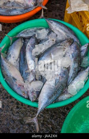 Frischer Fisch in bunten Wannen am Kai bei Sassoon Docks, Mumbai, Indien. - Stockfoto