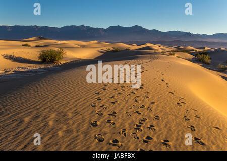 Fußspuren im Sand, Sonnenaufgang, Mesquite flache Sanddünen, Death Valley Nationalpark, Death Valley, Kalifornien - Stockfoto