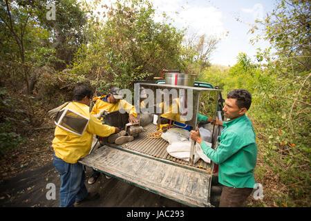 Honig-Bauern bereiten zu ernten und Honig aus den Bienenstöcken in Léon Abteilung, Nicaragua zu extrahieren. - Stockfoto