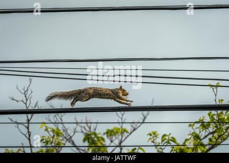 Atemberaubend Eichhörnchen Auf Draht Ideen - Die Besten Elektrischen ...