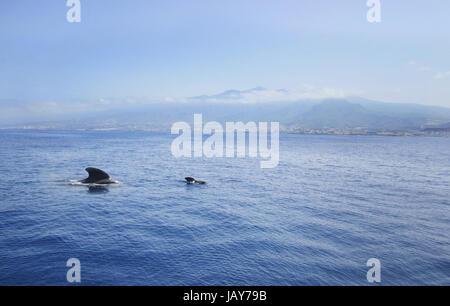 Familie der Delfine auf dem Hintergrund der Berge in den - Stockfoto