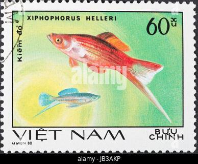 Sozialistische Republik von VIETNAM - CIRCA 1980: Eine Briefmarke gedruckt im Vietnam zeigt Xiphophorus Helleri - Stockfoto