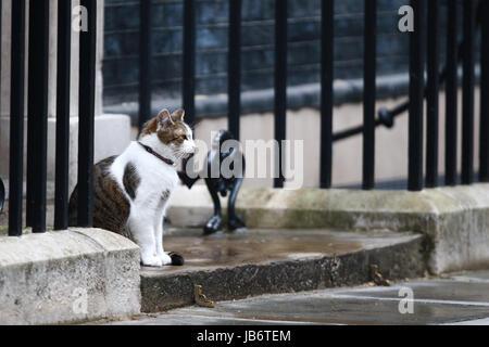 London, UK. 9. Juni 2017. Larry sitzt die Katze auf den Stufen der Nummer 10 Downing Street. Die Parlamentswahlen - Stockfoto