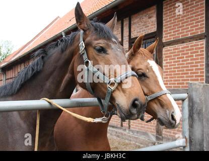 bad harzburg pferderennen 2019