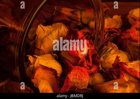 Bunte Rosen Verschütten von umgekippt vase - Stockfoto