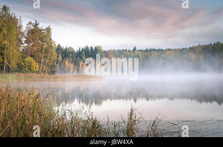 Leuchtende Farben der Herbst Birkenwald im Vindelfjäll Natur ...