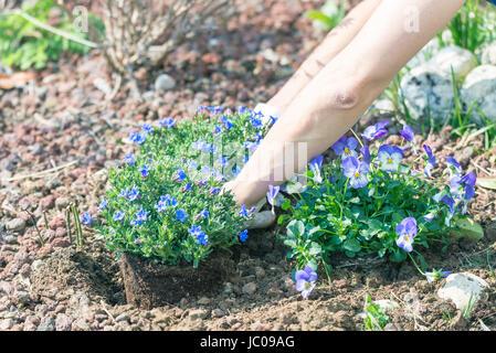 Fr hling zu hause im garten boden hacken und blumen for Pflanzen zu hause